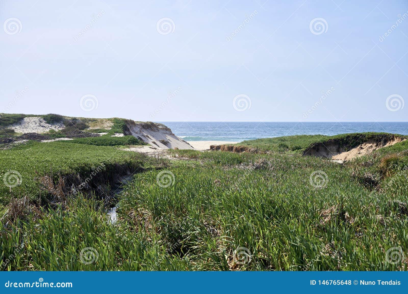 Vegeta??o verde sobre as dunas antes do oceano