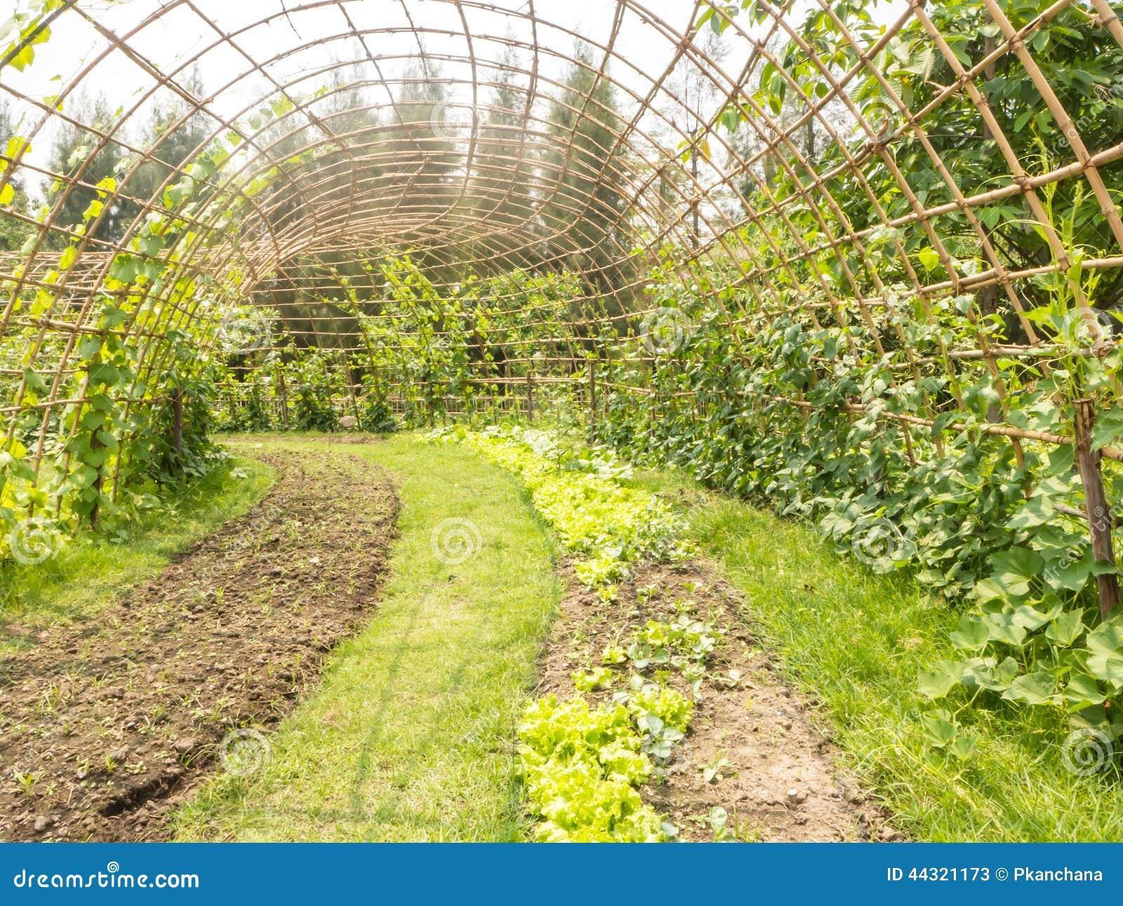 How to Start a Backyard Bamboo Business