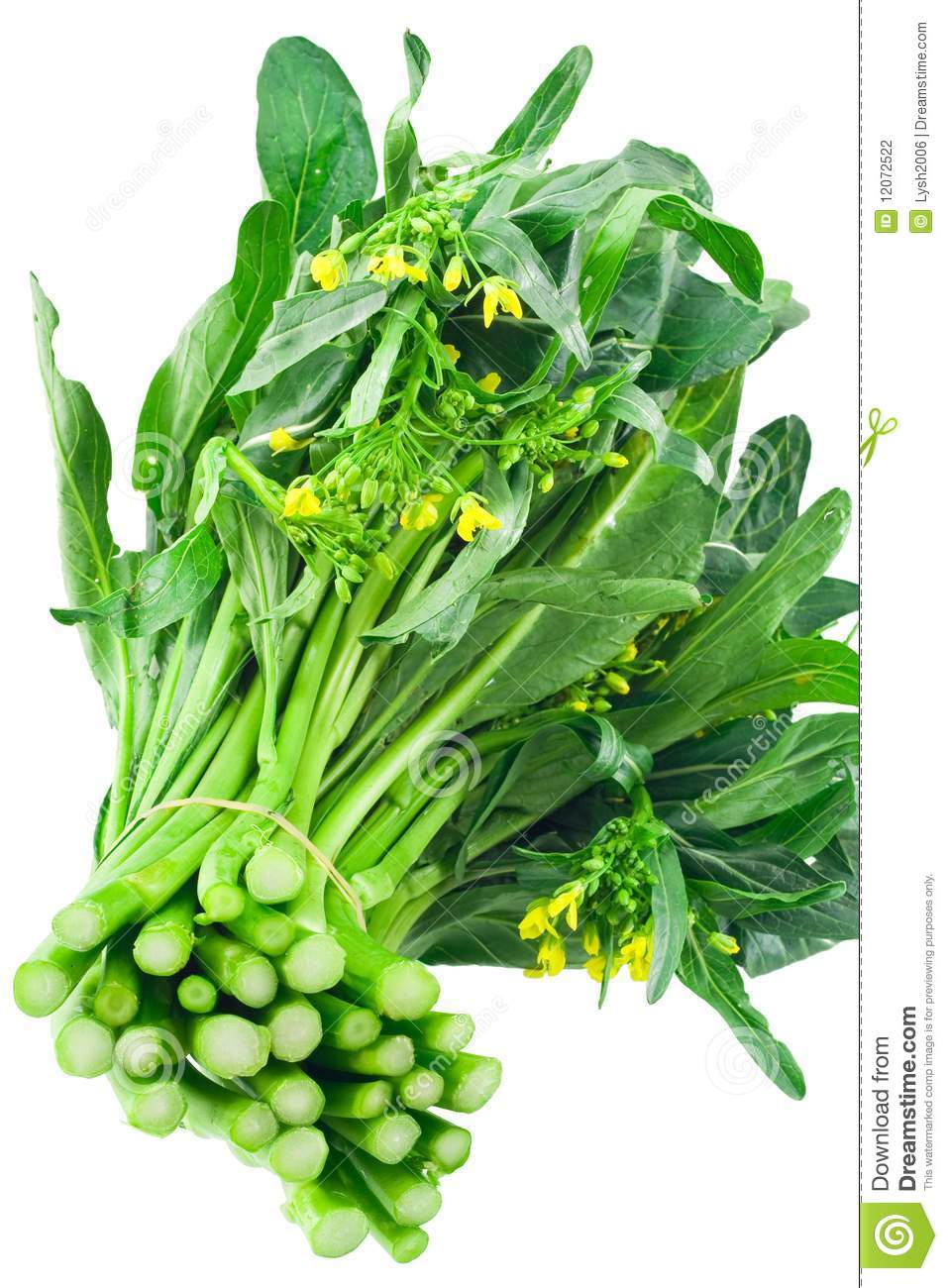 Vegetable Choy Sum Stock Photography - Image: 12072522