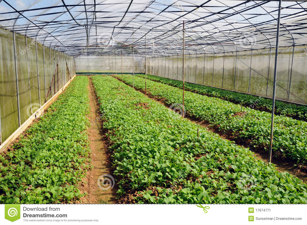 vegetable production business plan