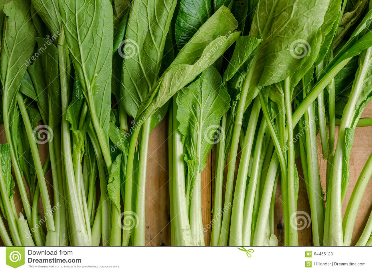 Vegetable Fresh Green Chinese Cabbage Bok Choy Pok Choi Or Pa