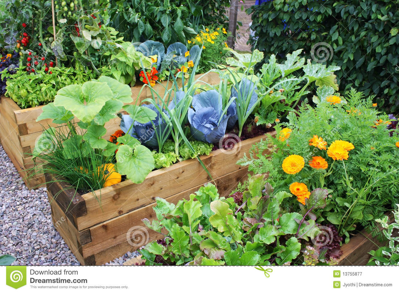 Wooden bed frame plans - Vegetable Garden Royalty Free Stock Photography Image 13755877