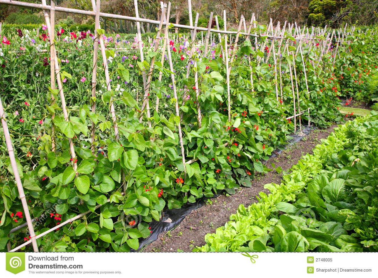 A Vegetable Garden Royalty Free Stock Photo Image 2748005