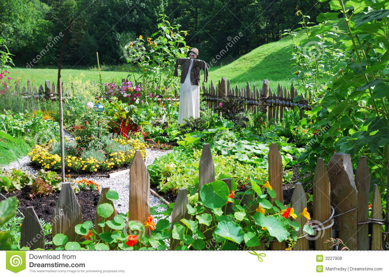 Vegetable Garden Stock Photo. Image Of Scarecrow, Herbage