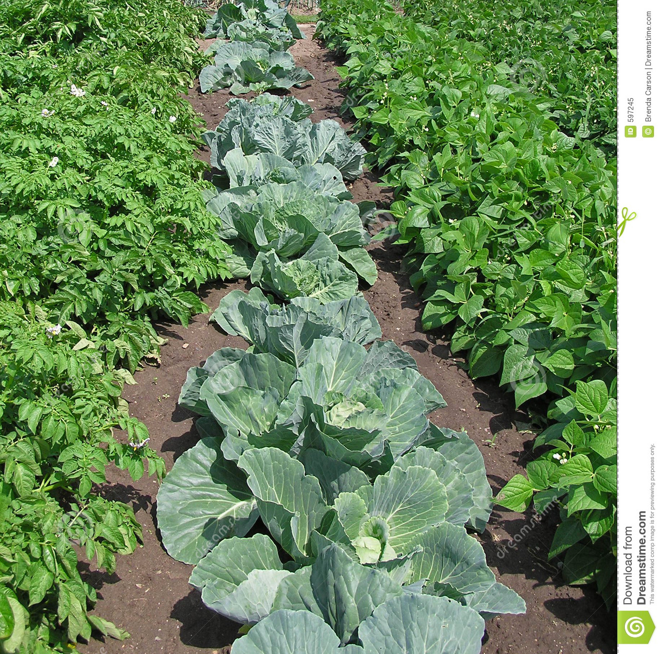 Vegetable garden stock image image of patch food for Garden pictures
