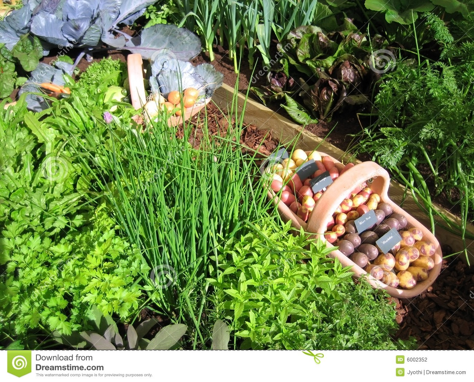 Vegetable Garden Stock Photography  Image 6002352