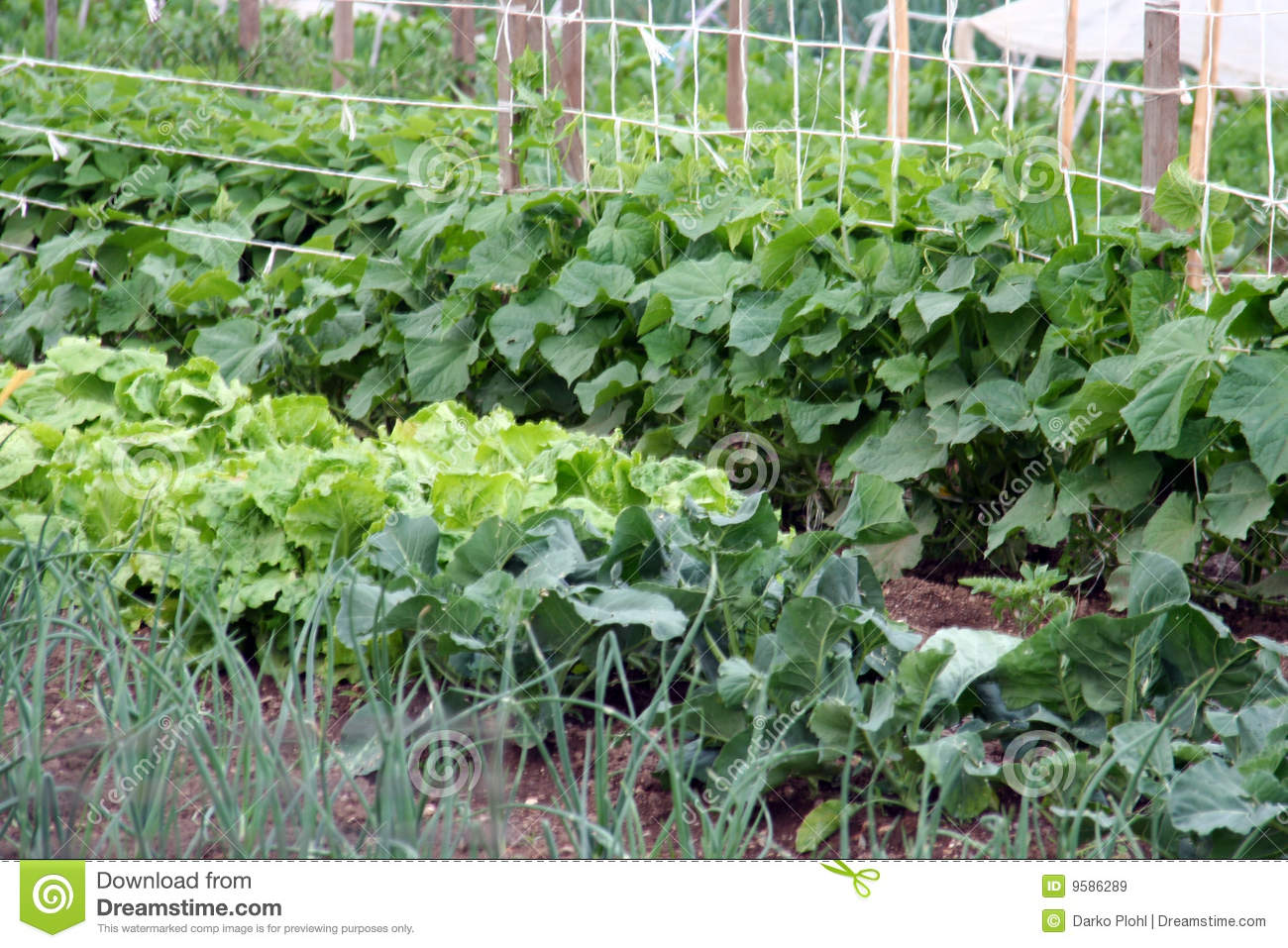 Vegetable garden bad with onion, salad, cucumber and other green stuff ...