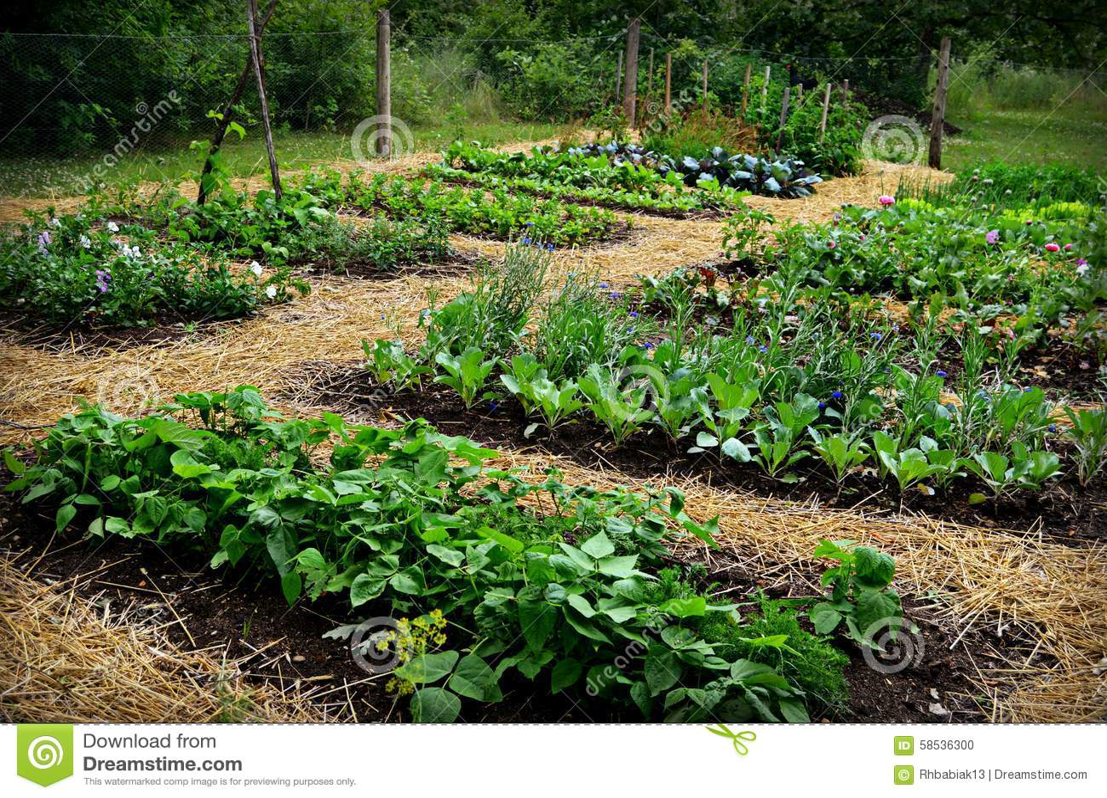Vegetable Garden Stock Photo. Vegetable Garden Stock Photo   Image  44006565