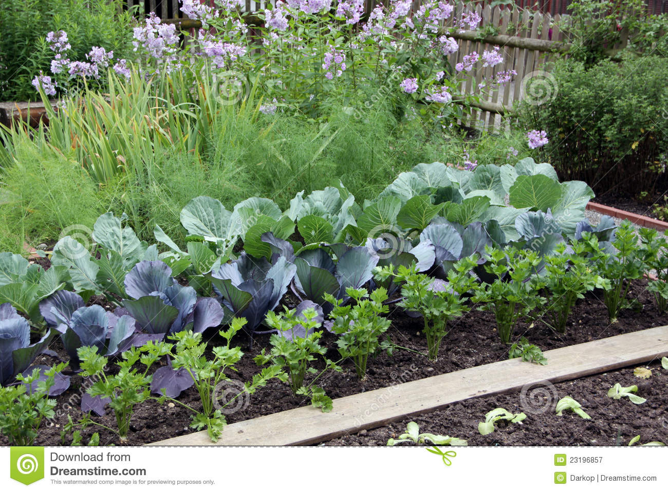 Vegetable Garden Bed Stock Image. Image Of Garden, Plants