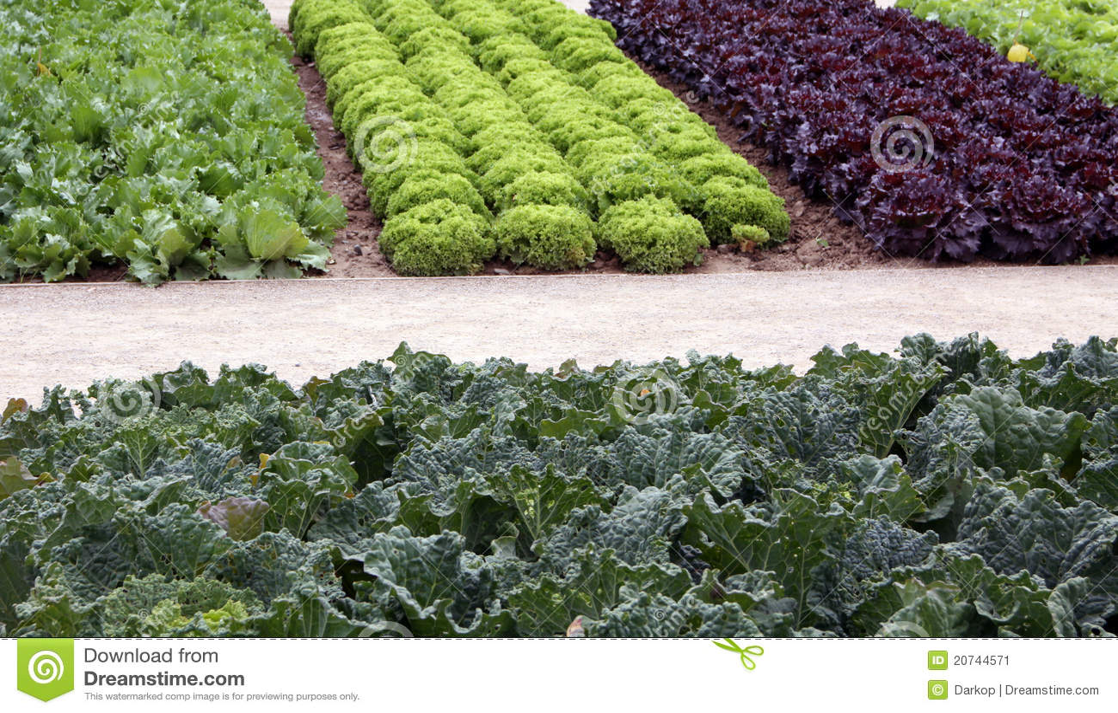 vegetable garden beds with salad and cale stock image. Black Bedroom Furniture Sets. Home Design Ideas