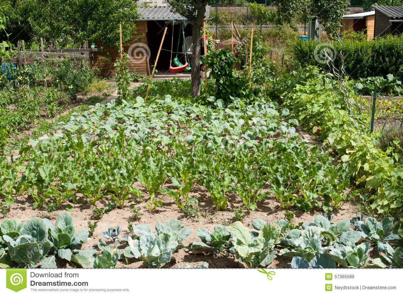 Vegetable garden stock photo image 57365589 for Different garden plants