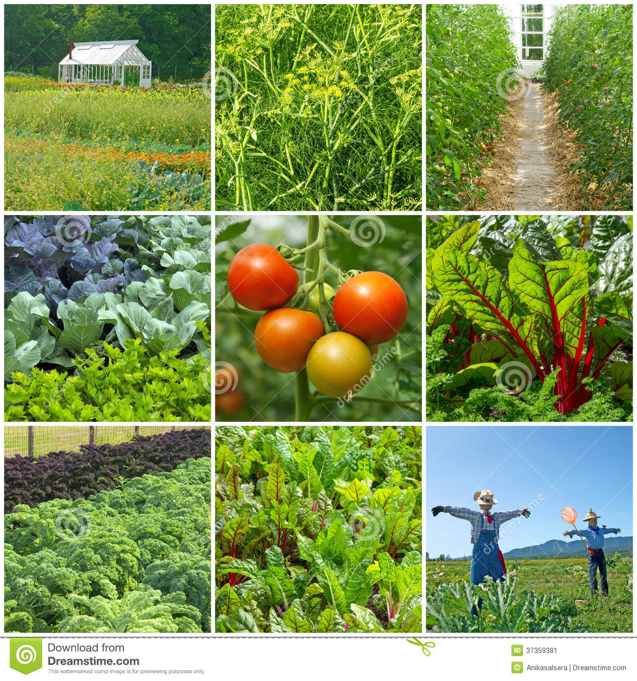 Vegetable garden stock image image of agricultural for Summer vegetable garden