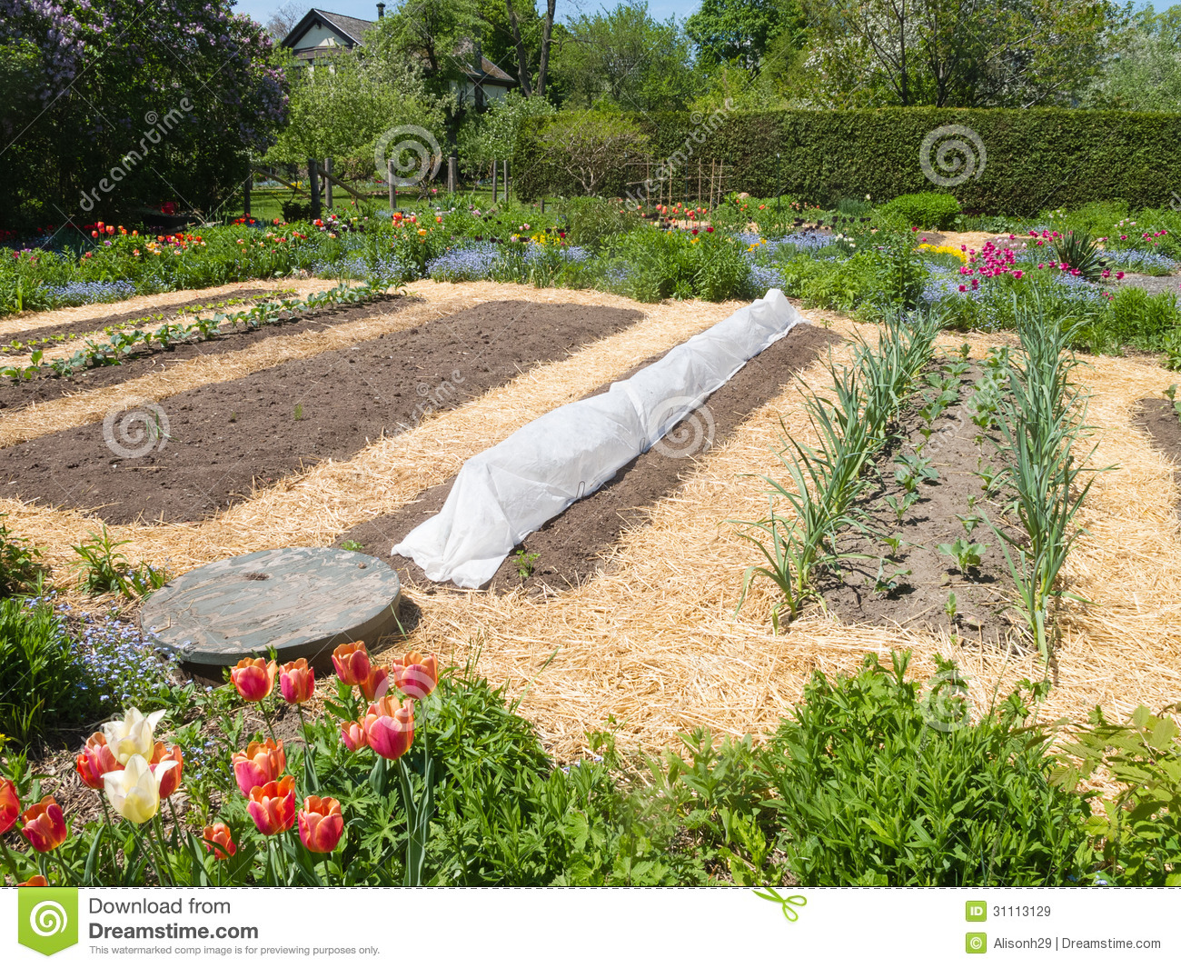 Mulch For Vegetable Garden Beds