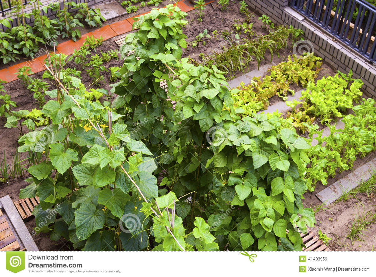 A Vegetable Garden Stock Photo Image 41493956