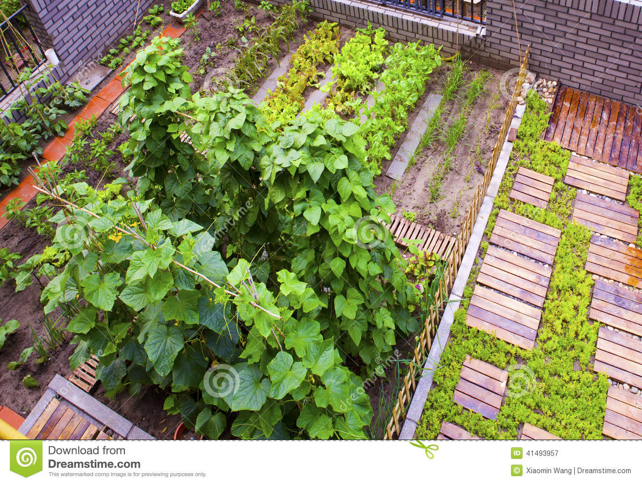 A Vegetable Garden Stock Photo Image 41493957
