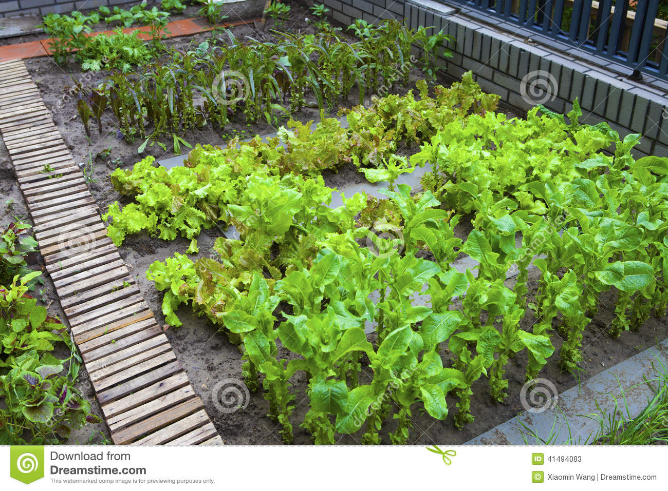 A Vegetable Garden Stock Photo Image 41494083