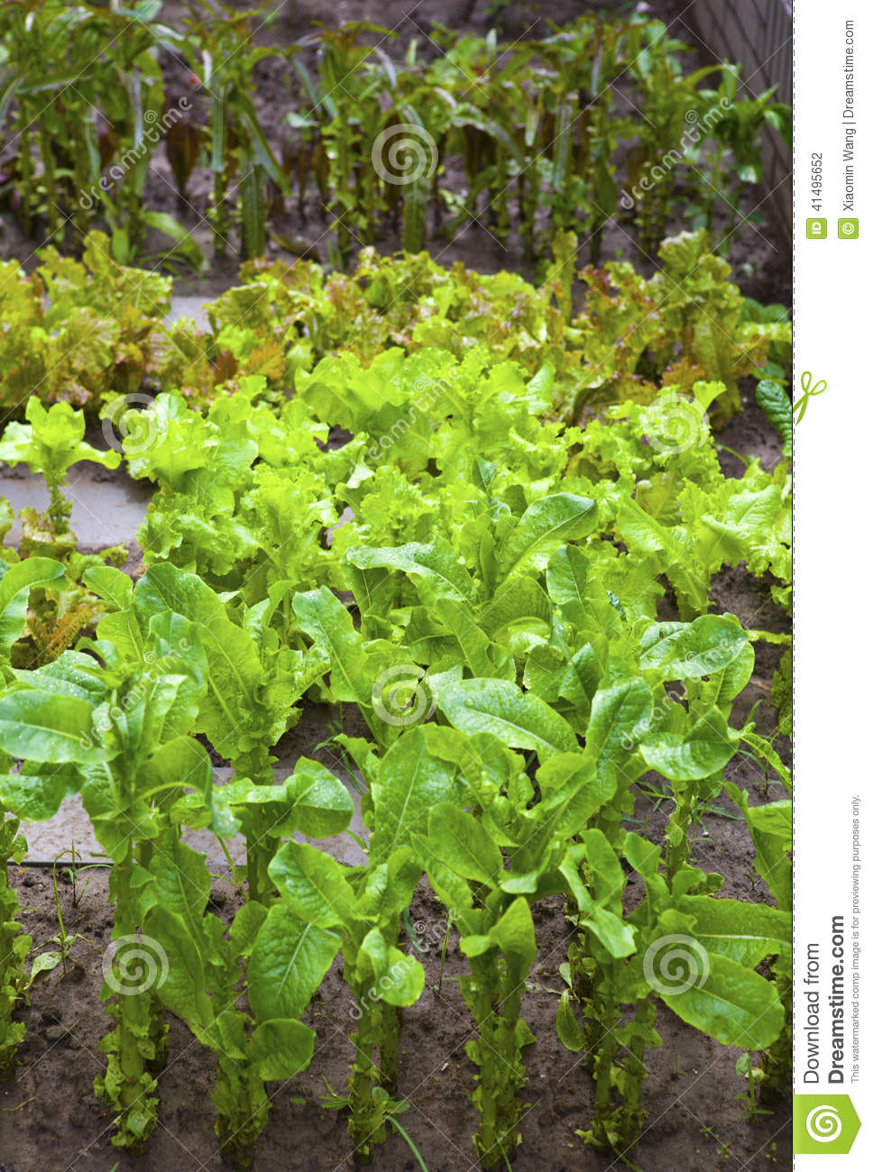 A Vegetable Garden Stock Photo Image 41495652