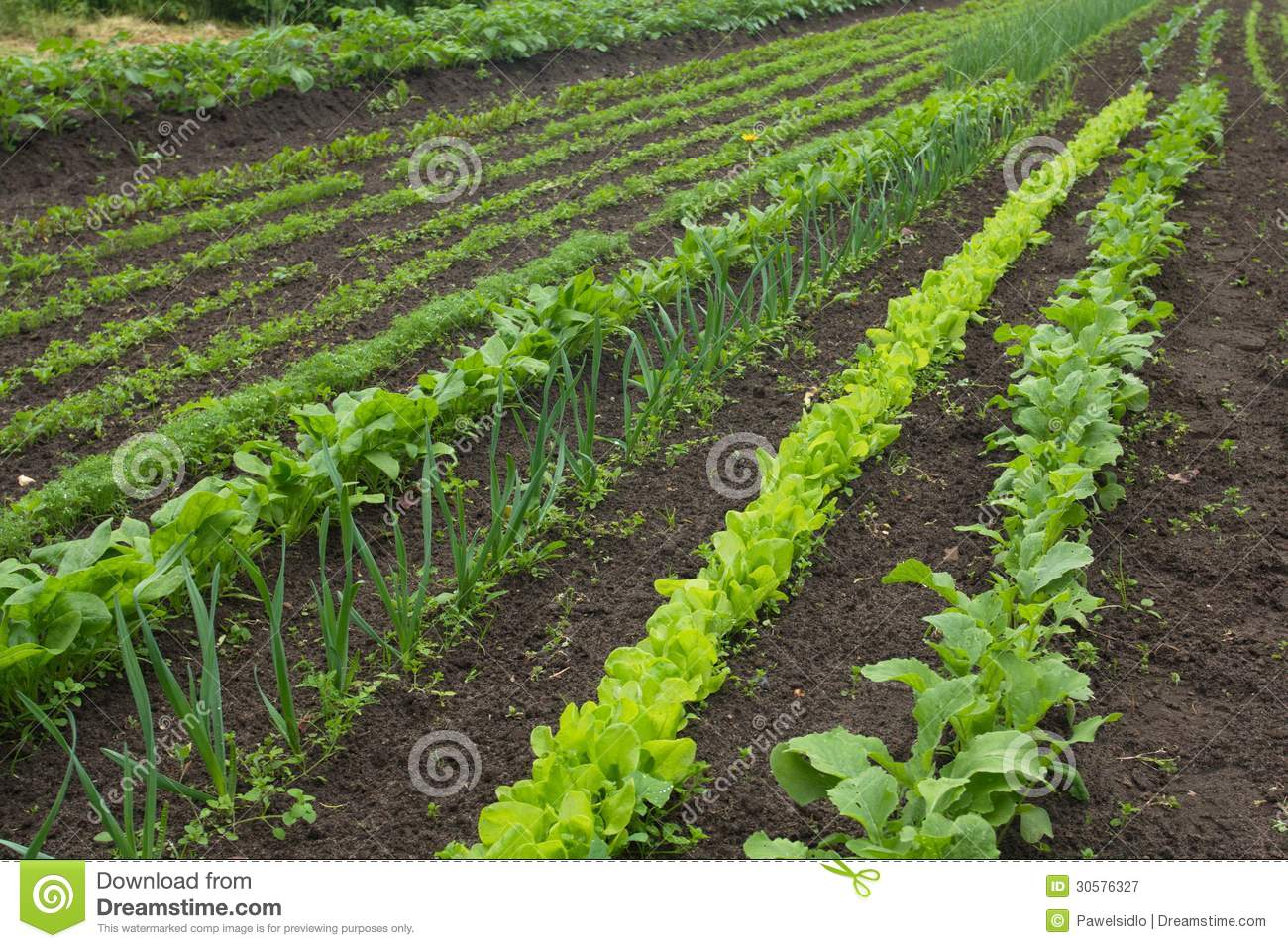 A Vegetable Garden In Late Spring Royalty Free Stock Photography Image 30576327