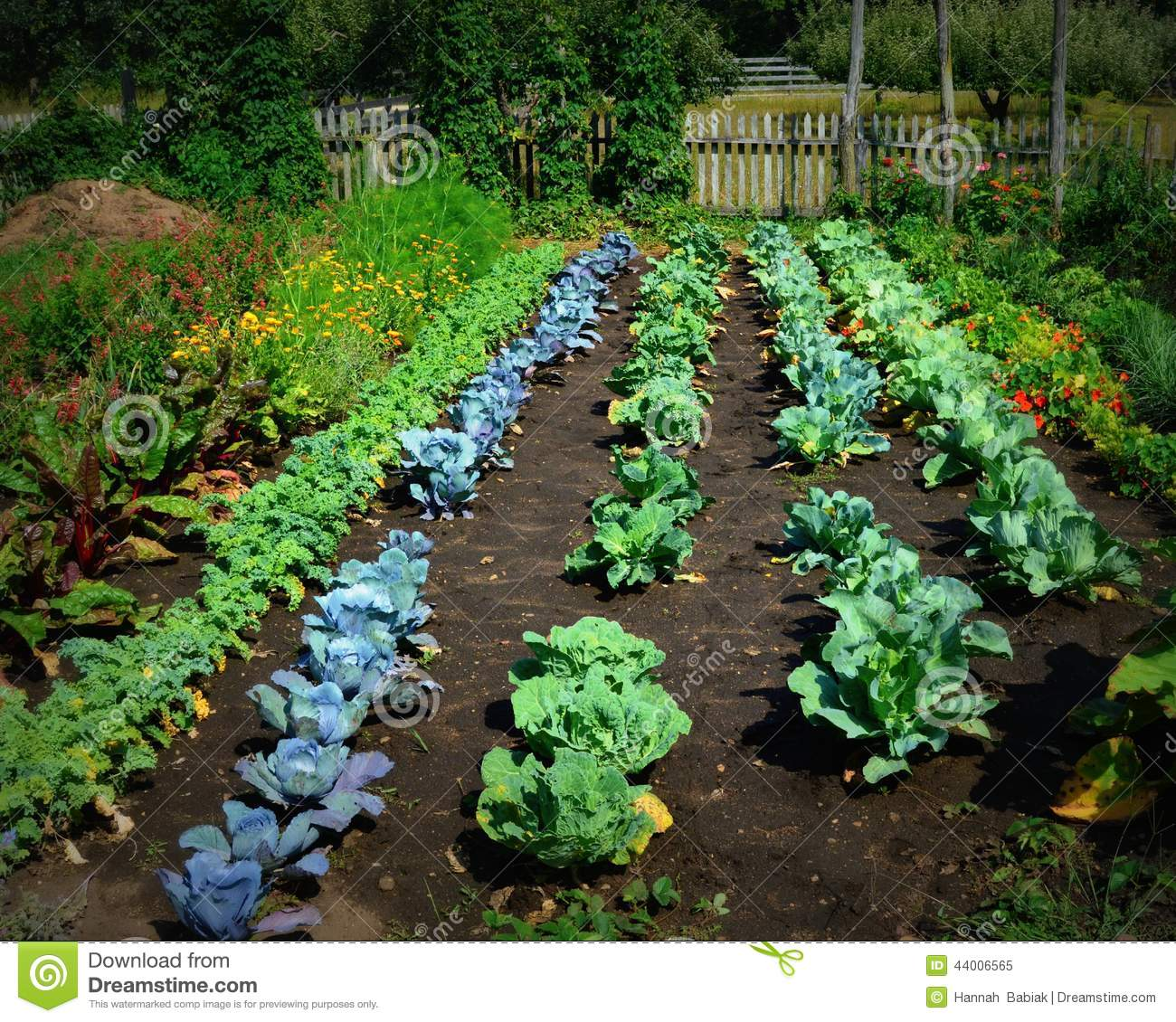 This is a vegetable garden from Old World Wisconsin. Lots of cabbage ...