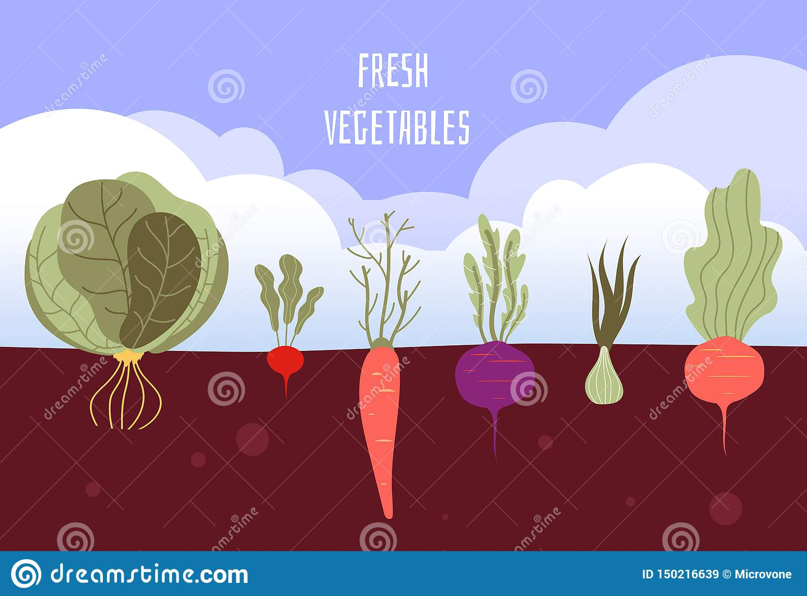Vegetable garden. Organic and healthy food veggies gardening summer vegetables with roots in soil vector background