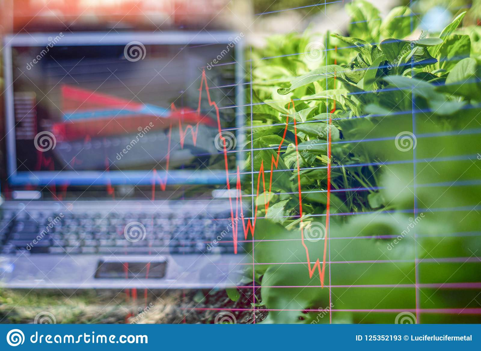 Vegetable garden Organic , And light in morning On a closed farm system Non-toxic And a computer screen showing stock trading char