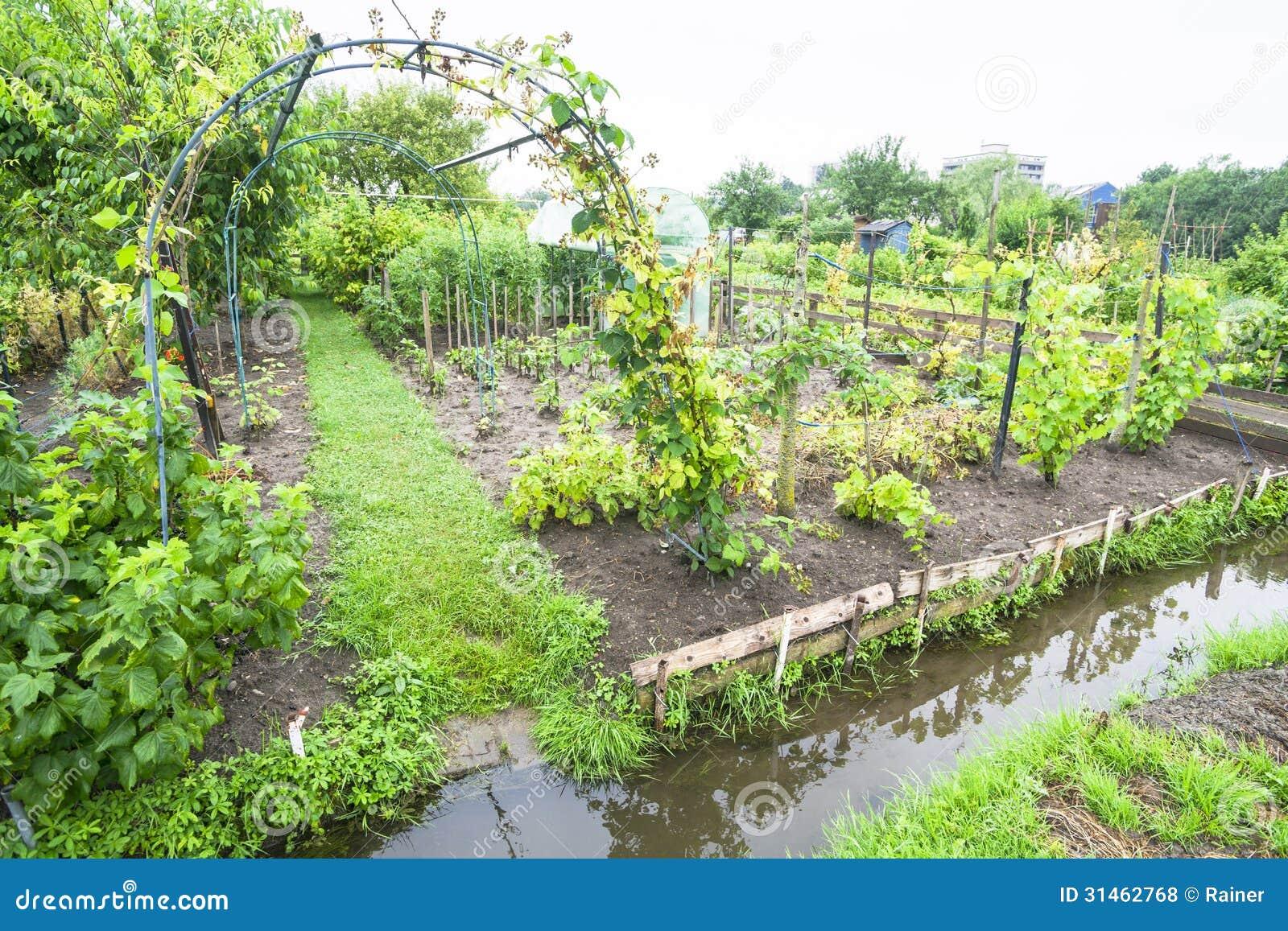 Garden Design Vegetable Patch : Free vegetable garden photos design patch good ideas