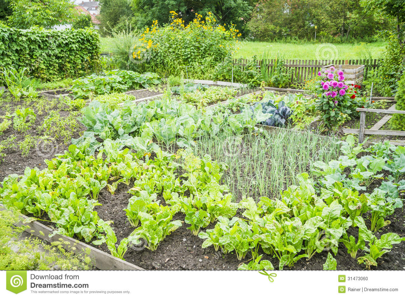 Vegetable Garden Patch Stock Photo Image 31473060