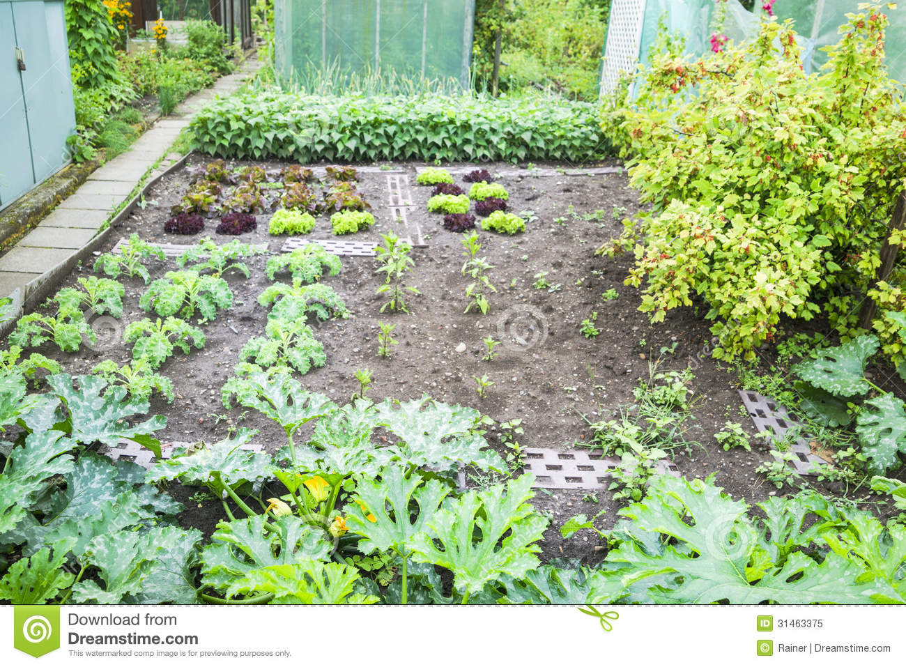 Vegetable Garden Patch Royalty Free Stock Photo Image