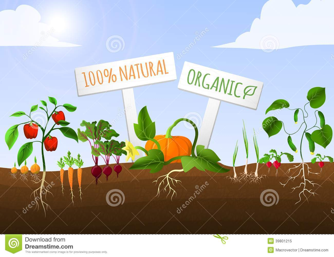 Vegetable garden graphic - Royalty Free Stock Photo