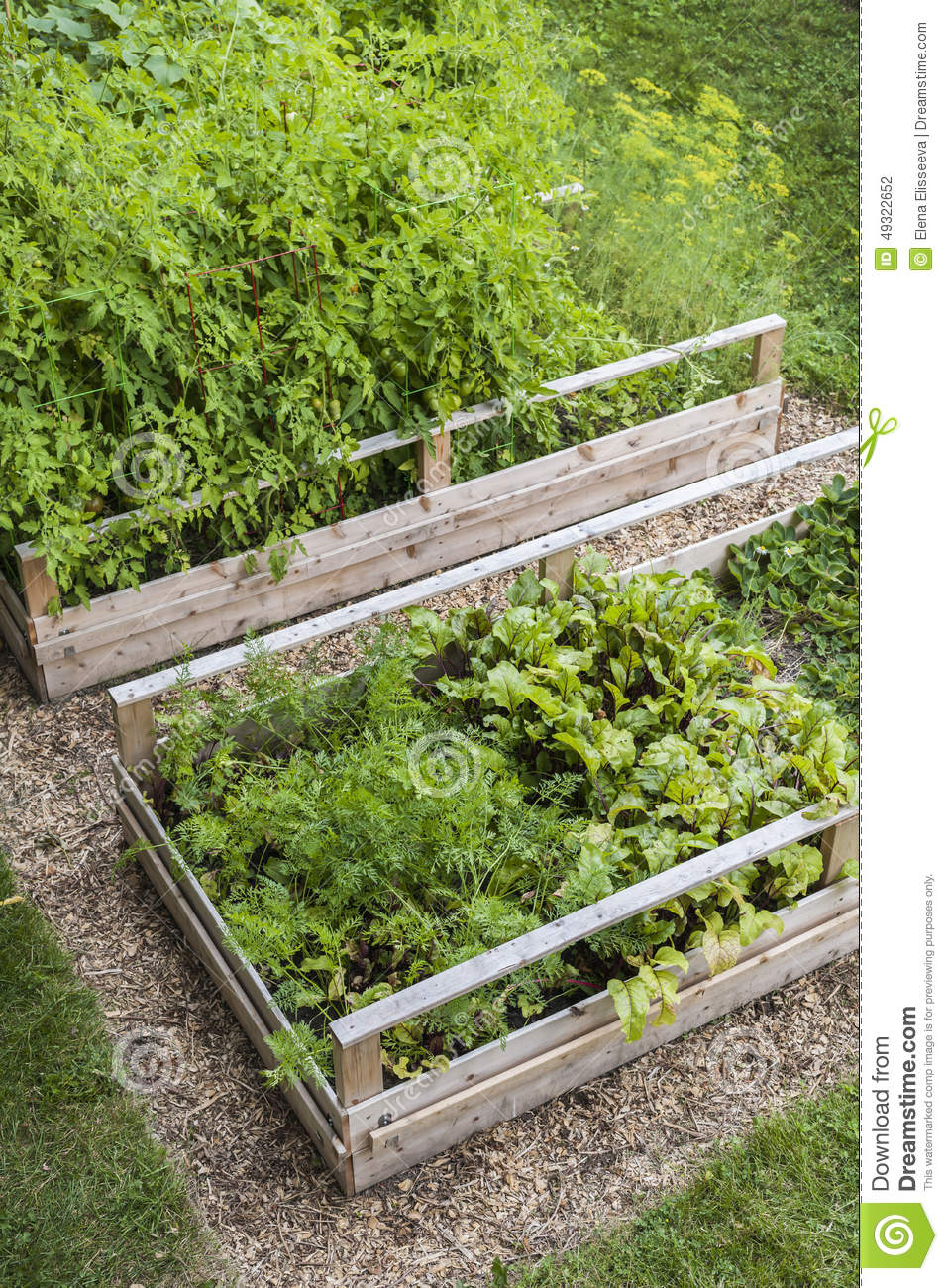 Vegetable Garden In Raised Boxes Stock Photo Image 49322652