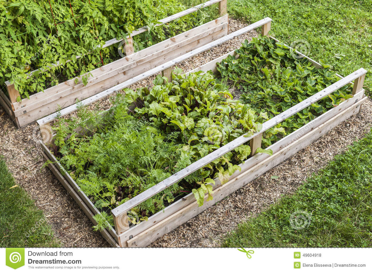 Raised vegetable gardens - Vegetable Garden In Raised Boxes Royalty Free Stock Photos