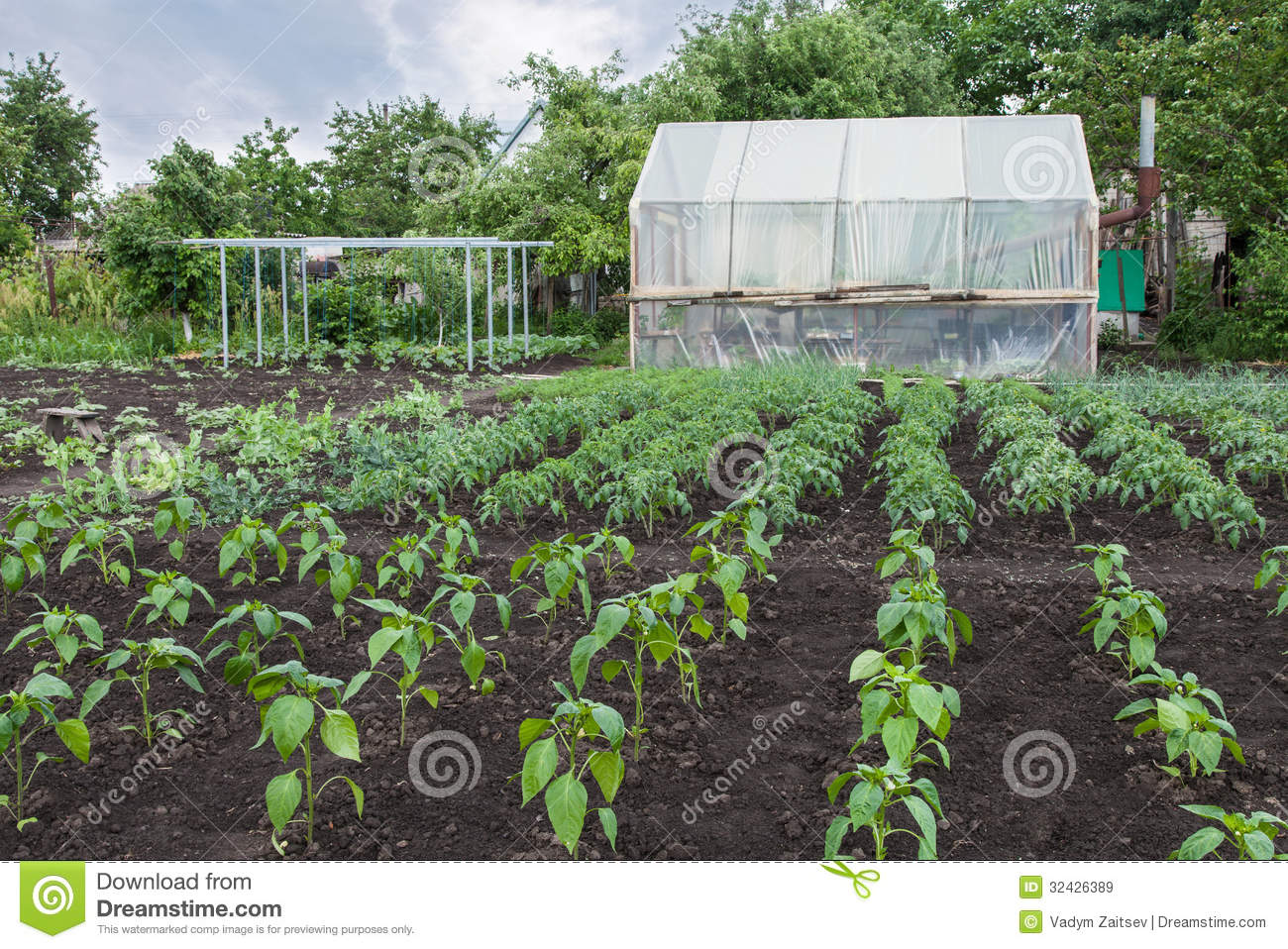 Vegetable Garden Royalty Free Stock Images Image 32426389
