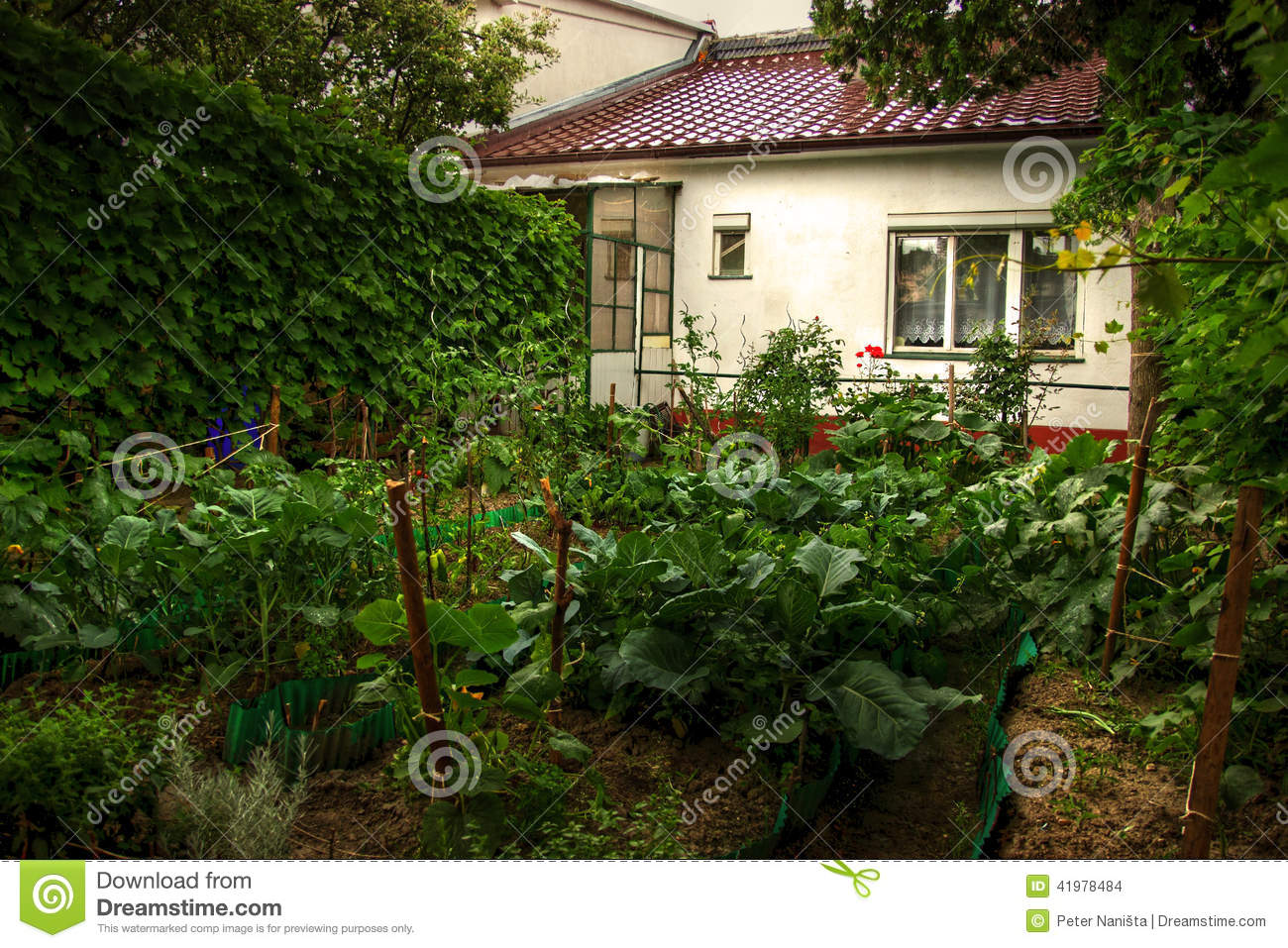 Vegetable Garden Stock Photo Image Of Forested Leaves 41978484