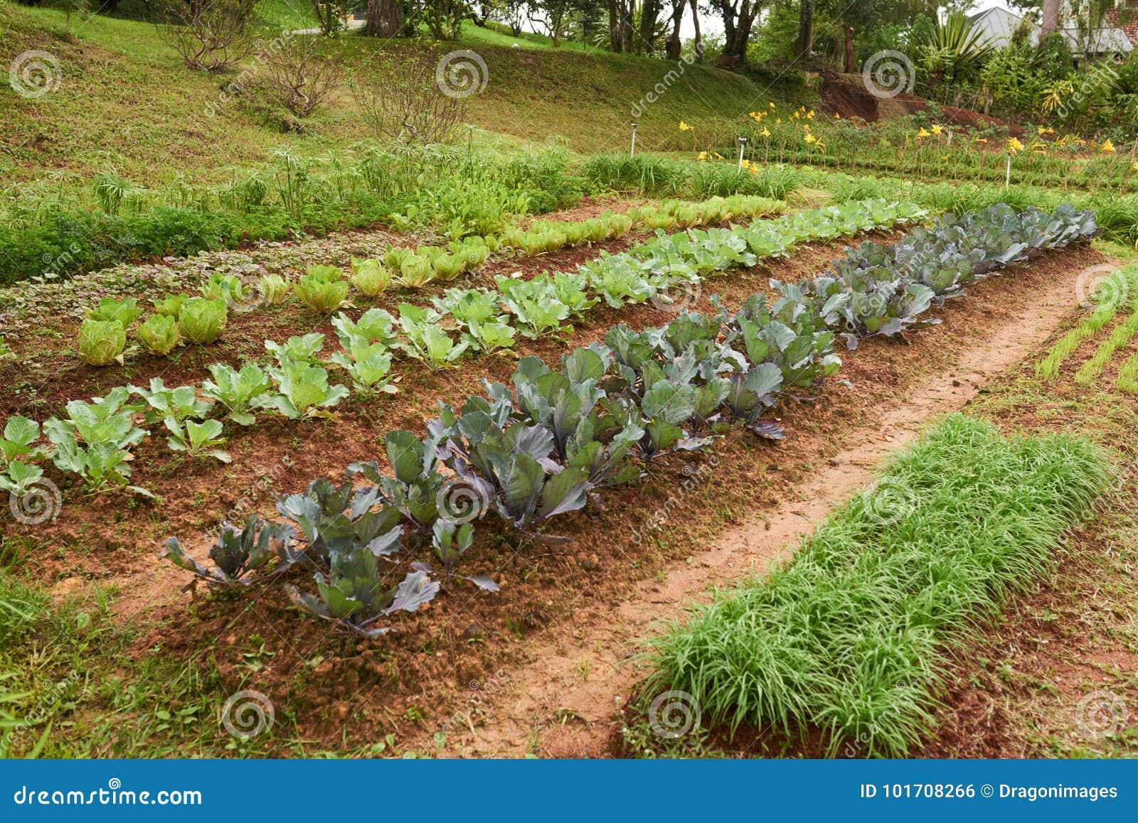 Vegetable Garden stock photo. Image of food, plants - 101708266