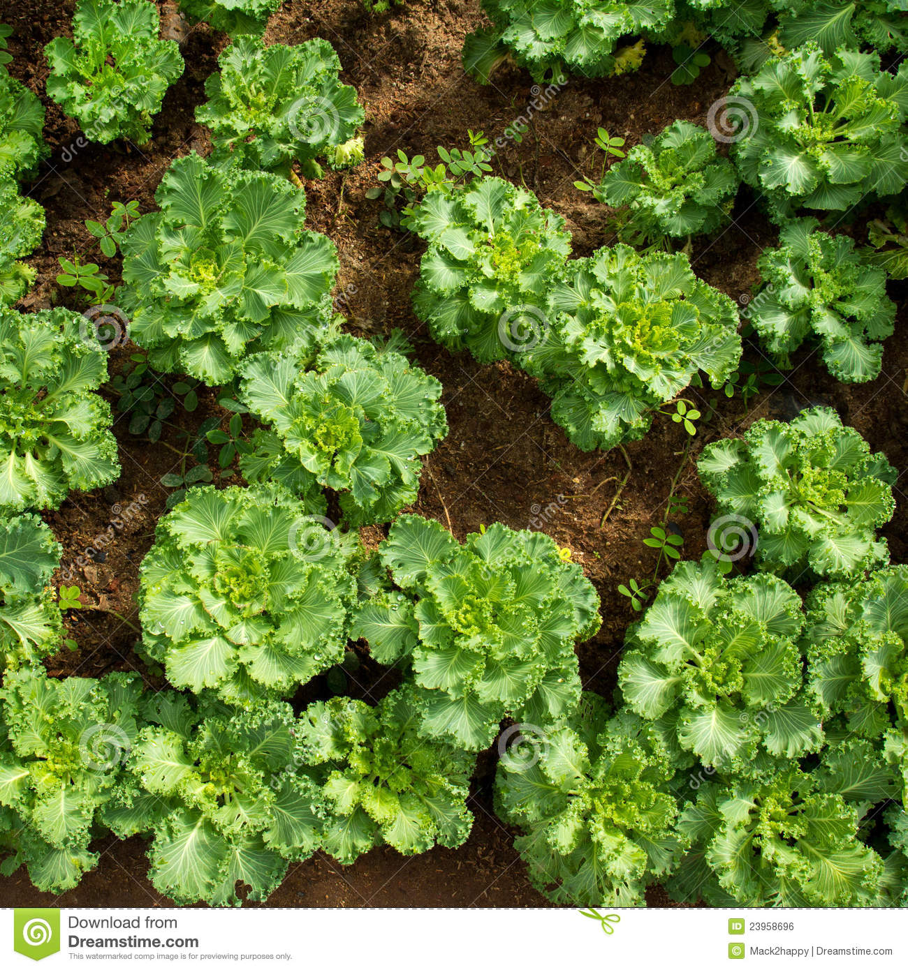 Garden Stock Image Image Of Design: Vegetable Garden From Top View Royalty Free Stock Image