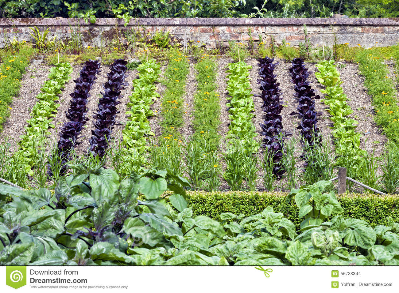 Merveilleux Vegetable Garden With Young Greens On A Slope