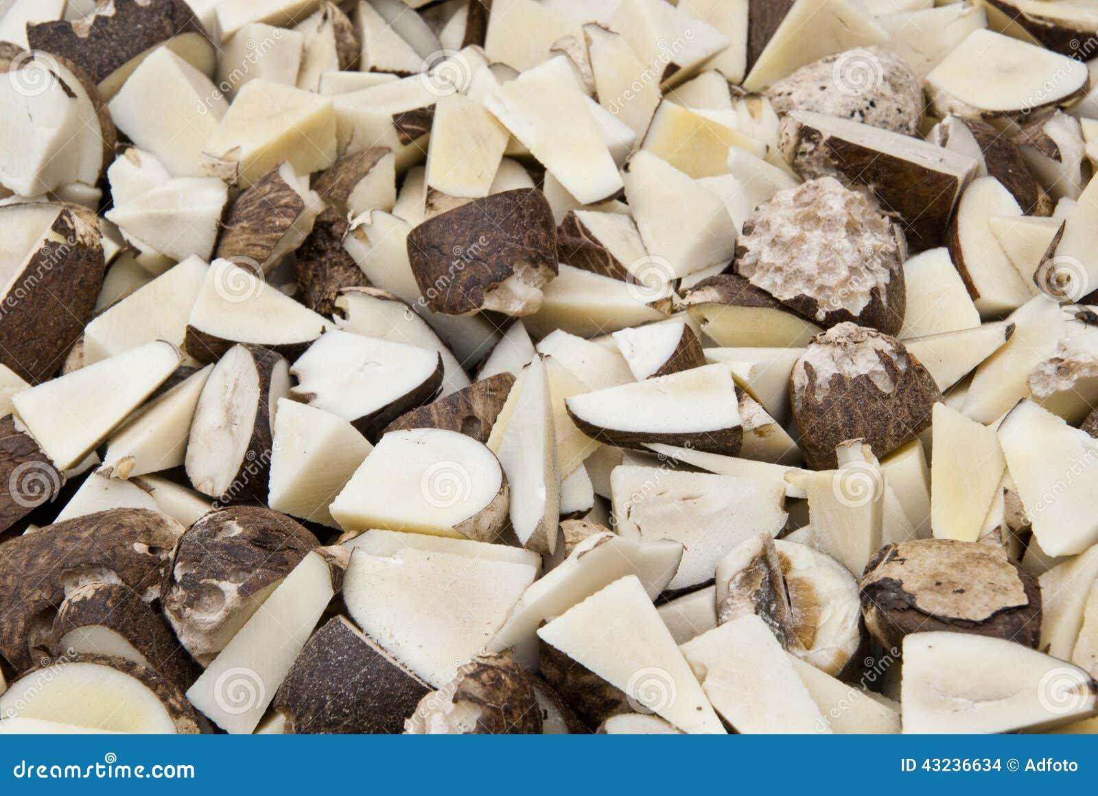 Vegetable Ivory - Tagua Seeds Cut