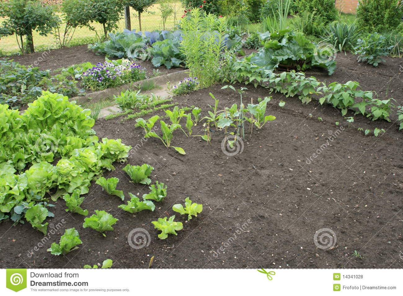 Vegetable patch royalty free stock photos image 14341028 for Vegetable patch