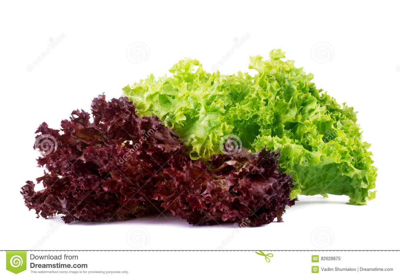 vegetable salad lettuce lollo rosso isolated on white background stock image image 82628875. Black Bedroom Furniture Sets. Home Design Ideas