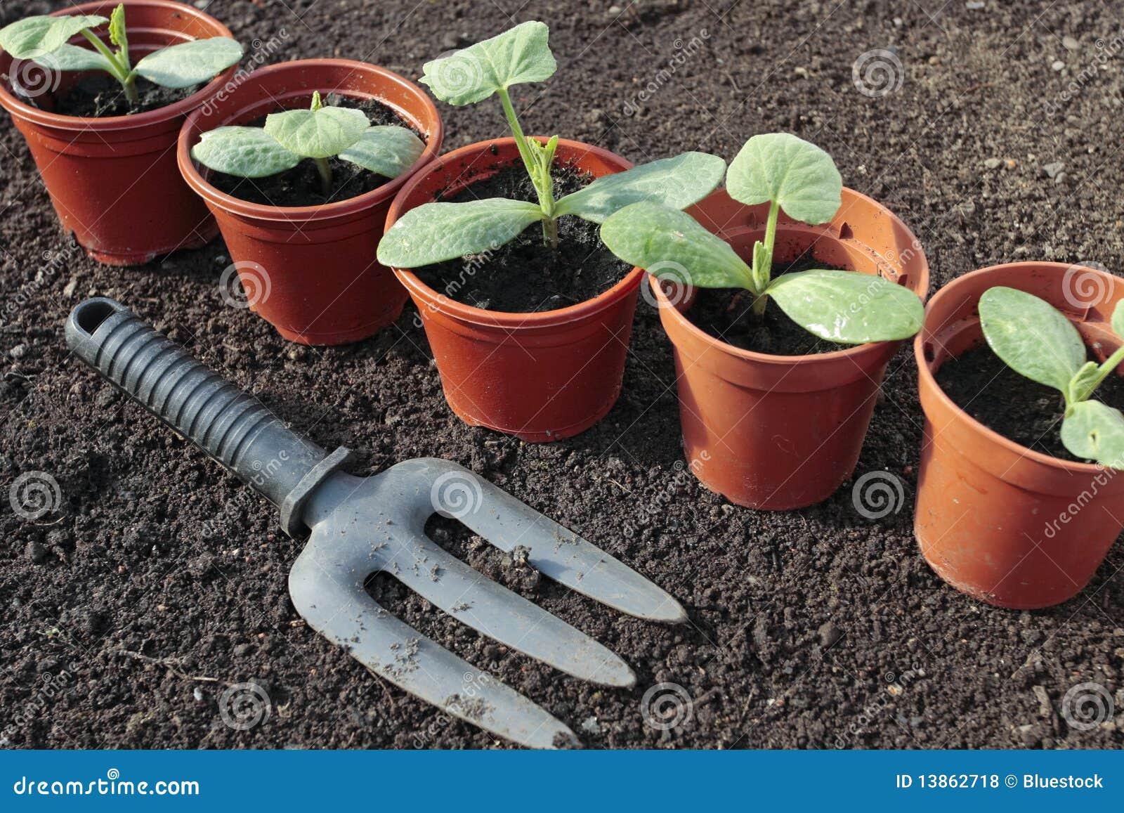 Vegetable seedlings growing in pots in spring