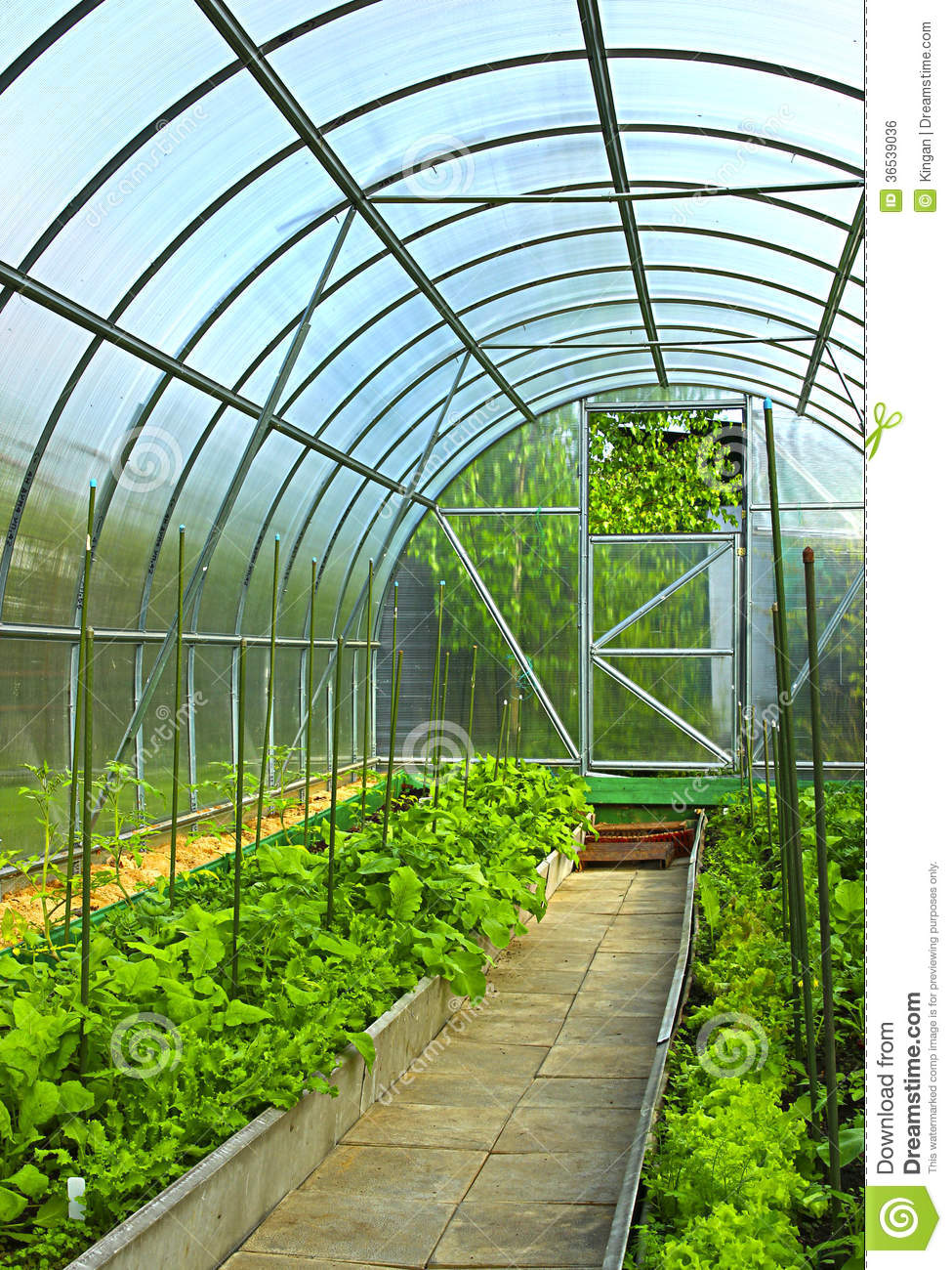 Greenhouse Growing Polycarbonate Transparent Vegetables ...