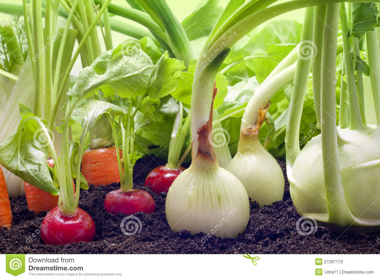 Vegetables growing in the garden stock image image 27297173 for What vegetables to grow