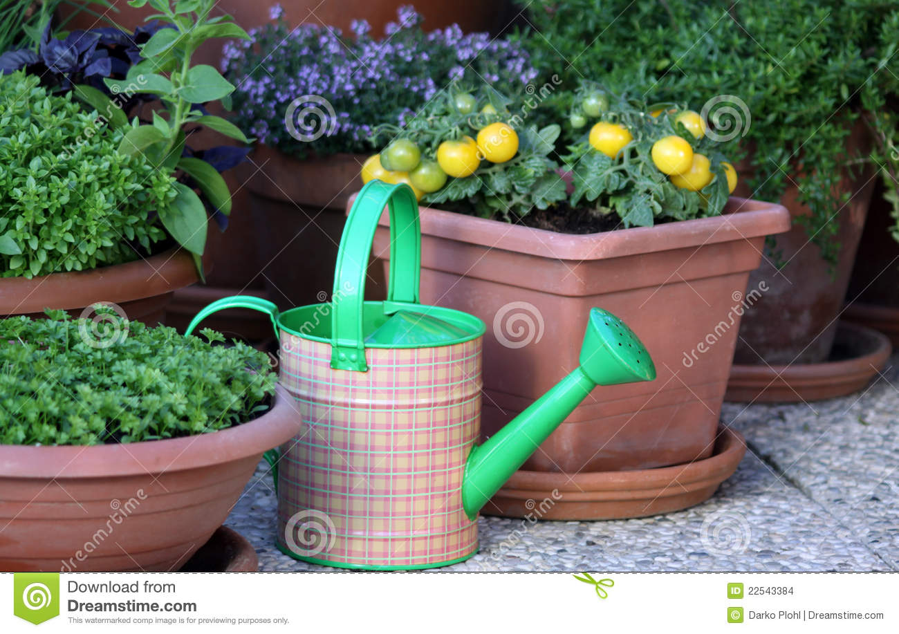 Vegetables and herbs plants in the pot stock images for Terrace garden plants