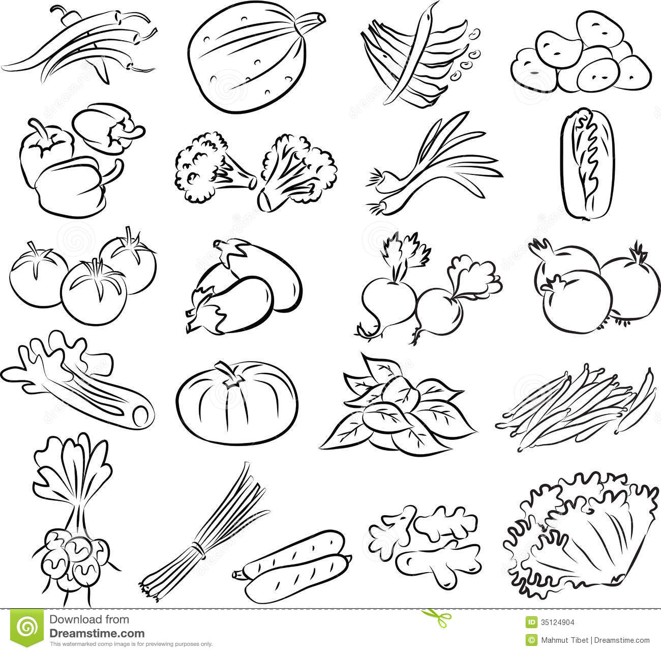 Line Drawing Zucchini : Vegetables set stock images image