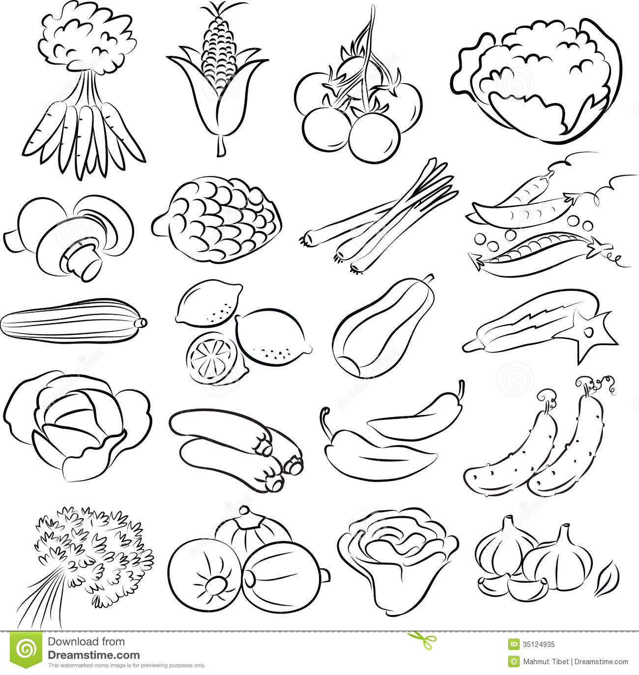Line Drawing Zucchini : Vegetables set royalty free stock photo image