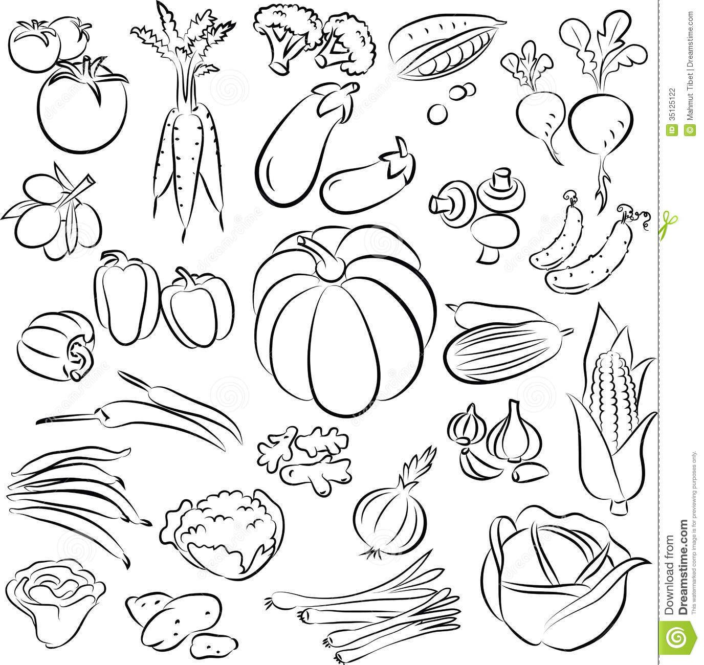 Line Drawing Zucchini : Vegetables set stock photography image