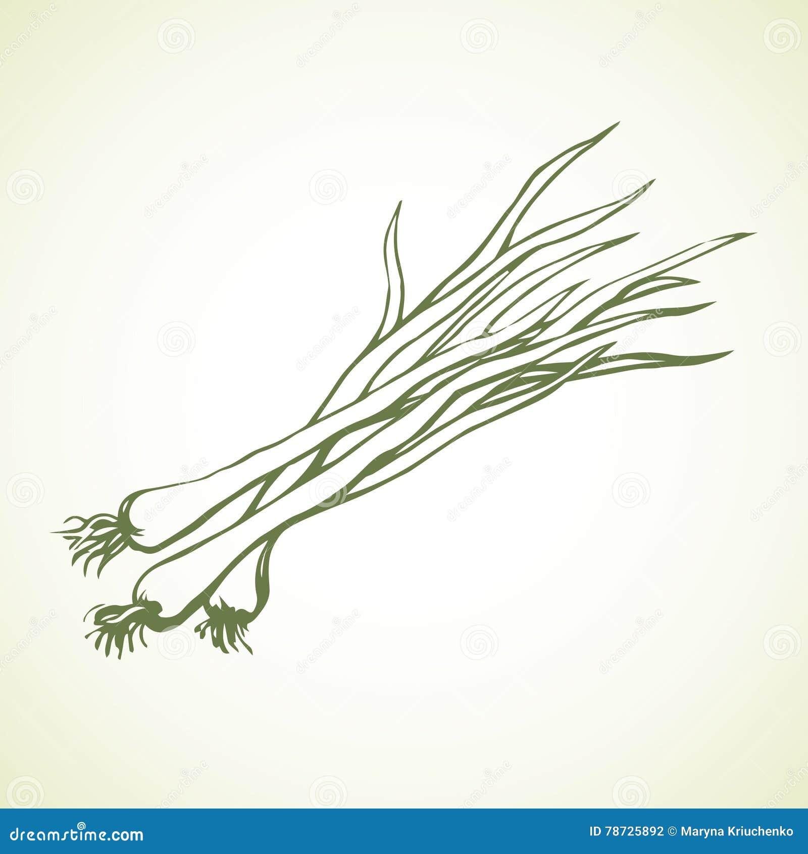 Vegetablesisolated grön onions bakgrund som tecknar den blom- gräsvektorn