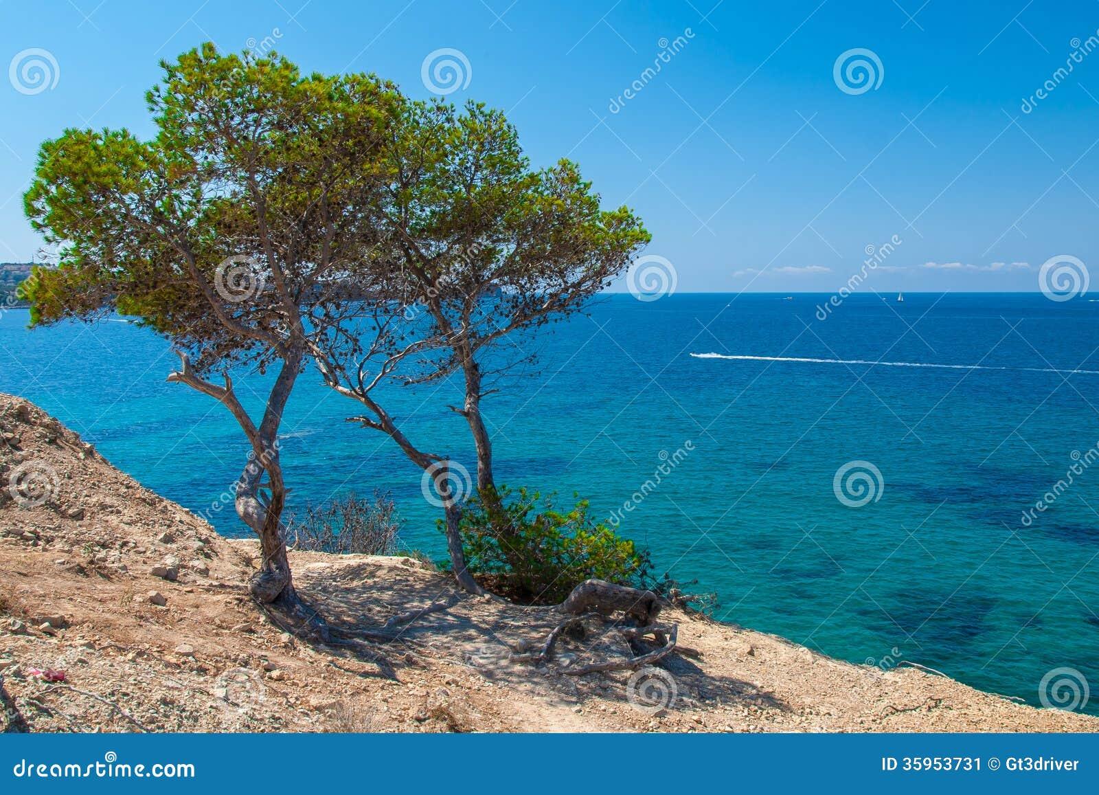 Vegetación subtropical que crece en la costa de Mallorca