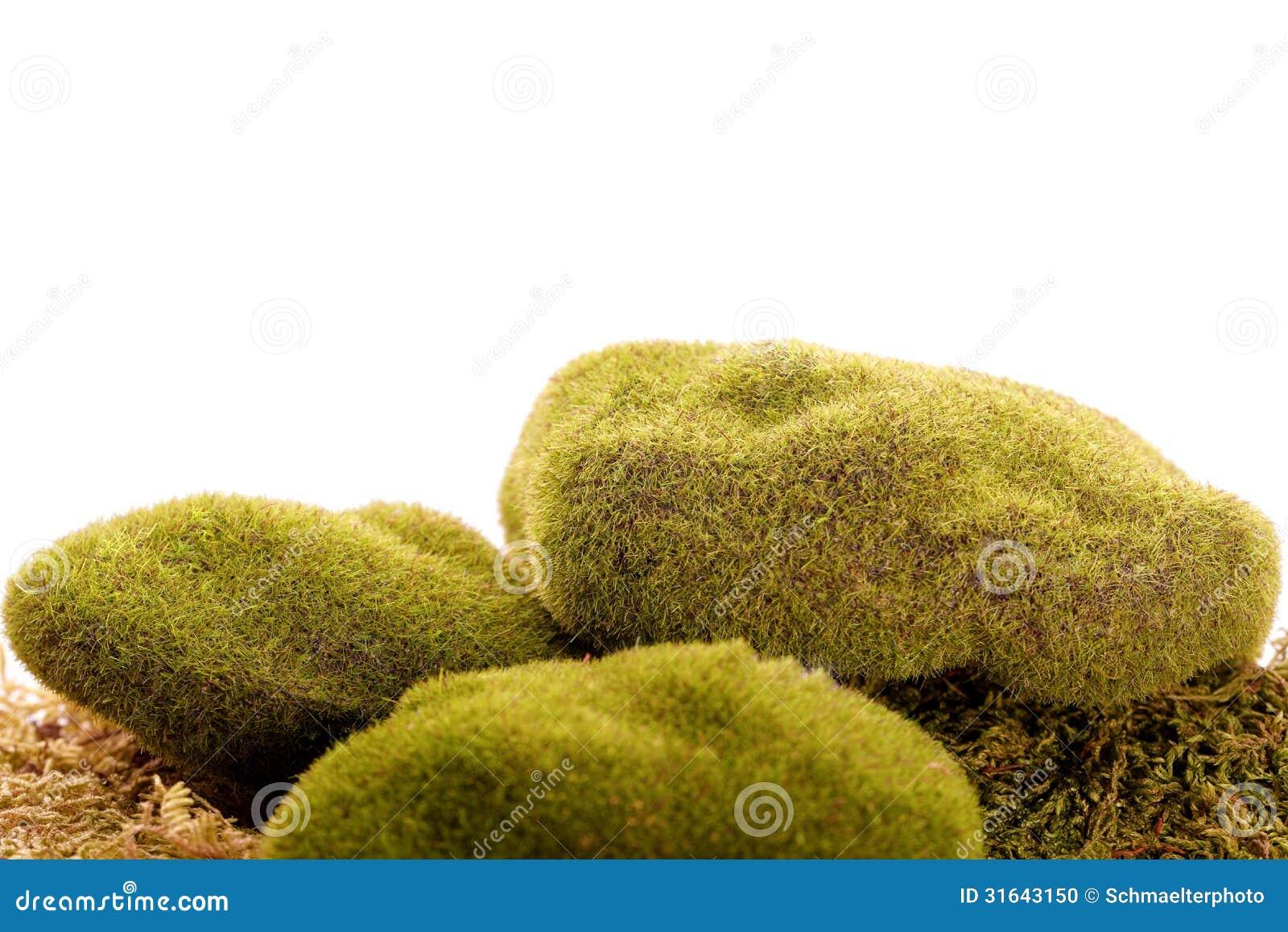 Vegetación verde de la roca del musgo