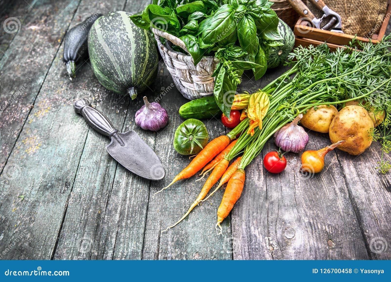 Vegetais da colheita com ervas e especiarias